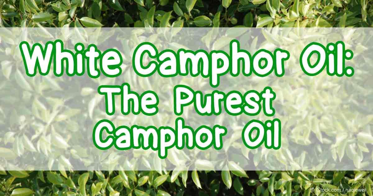 Camphor Main